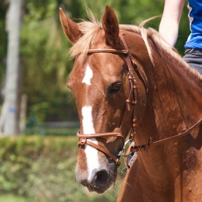 Jingle : Jument SF